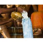 Laghu Rudra Puja and Homa (Maha Rudrabhishek Puja)
